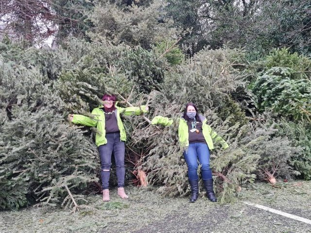 Fundraising staff with the Chjristmas trees.
