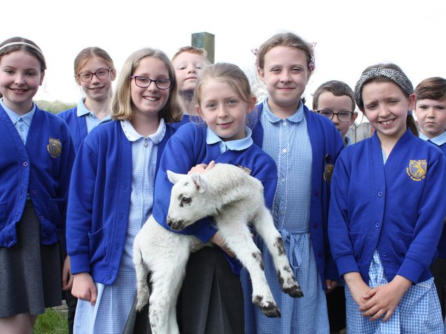 Children at Wilson's Endowed CE School in Over Kellet with one of the visiting lambs. Photo by Darren Newiss