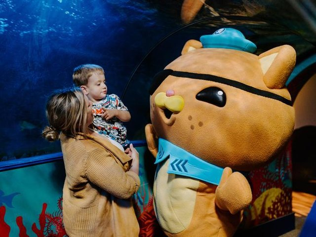 The Octonauts are coming to the north west