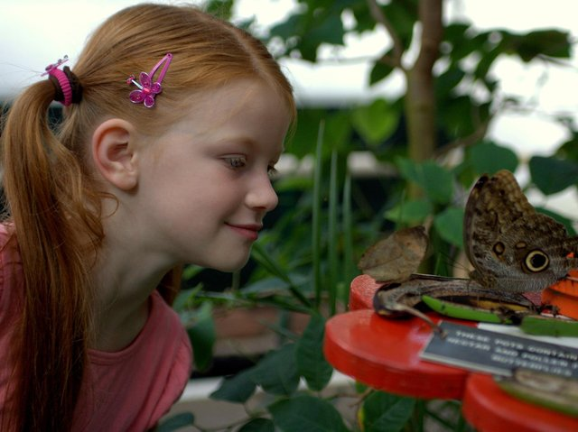 A youngster enjoys watching the butterflies