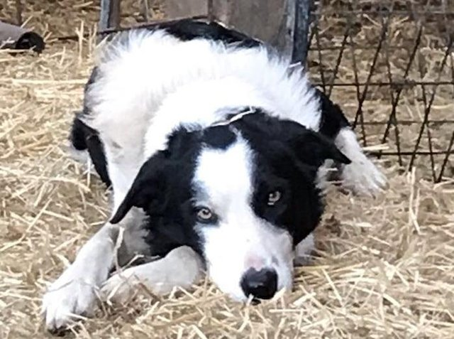 Jack the border collie is believed to have been stolen from a house near Carnforth.